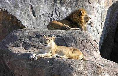 Photograph - African Lions by Keith Stokes