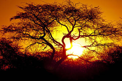 African Tree Art Print