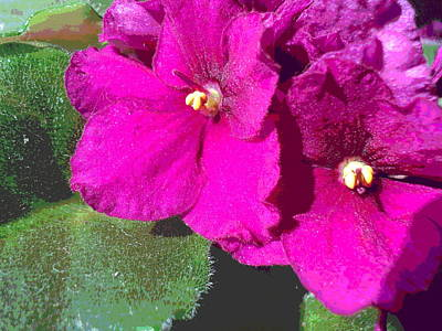 African Violet Texture Art Print by Padre Art