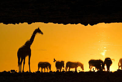 Photograph - African Wildlife Silhouette by Michele Burgess