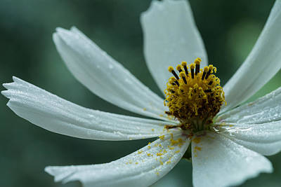 Photograph - After Rain by Daniel Kulinski