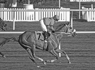 Horse Racing Photograph - After The Crossing  by Betsy Knapp