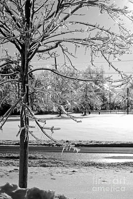 After The Ice Storm Art Print by Lila Fisher-Wenzel