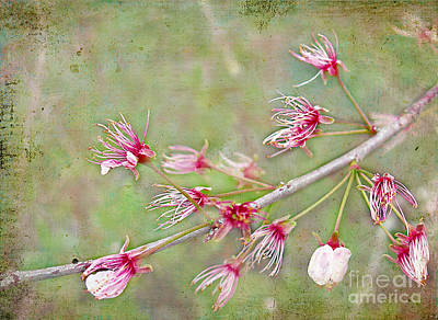 After The Party's Over Art Print by Judi Bagwell