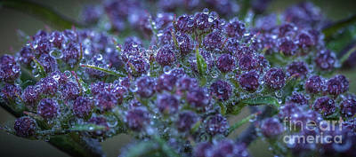 Photograph - After The Rain by David Waldrop