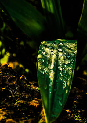 Photograph - After The Rain by Michael Goyberg