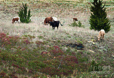 Photograph - Afternoon Graze by Fred Lassmann