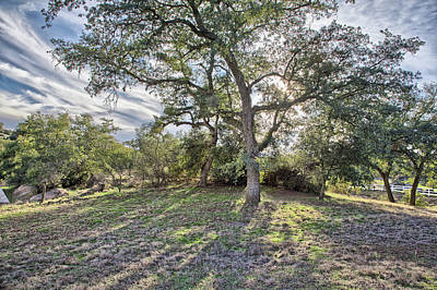 Photograph - Afternoon Oak With Cirrus by Peter Dyke