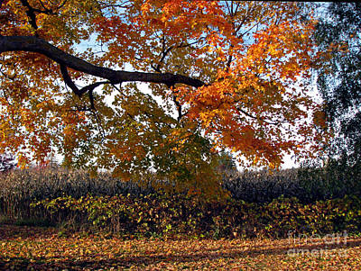 Afternoon Stroll- Autumn In The Country Art Print