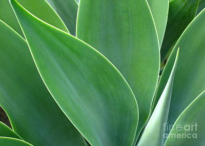 Art Print featuring the photograph Agave 2 by Ranjini Kandasamy