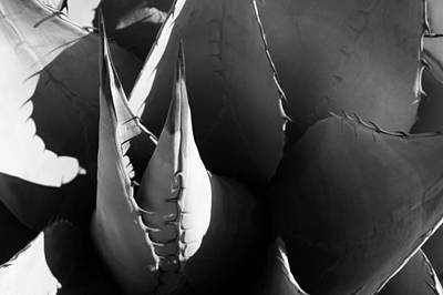 Photograph - Agave by Jason Smith
