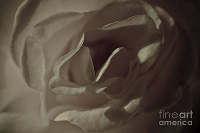 Photograph - Aged Rose by Kim Henderson