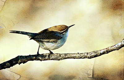 Photograph - Aged Wren by Lana Trussell