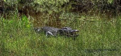 Photograph - Aggressive Alligator by Sean Allen