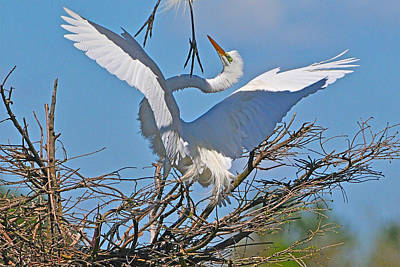 Photograph - Agony Of Defeat Great Egret by Alan Lenk
