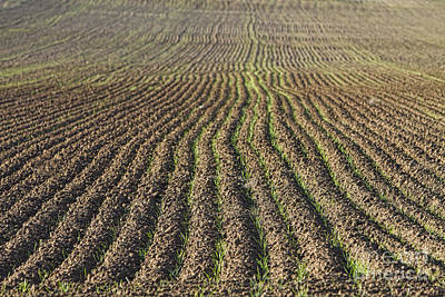 Farming Photograph - Agriculture Landscape Abstract by James BO  Insogna