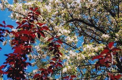 Photograph - Ah Spring by Barbara Plattenburg