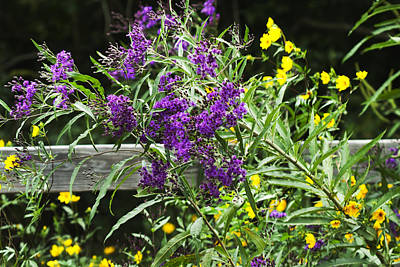 Alabama Purple Ironweed Wildflowers - Vernonia Gigantea Art Print by Kathy Clark