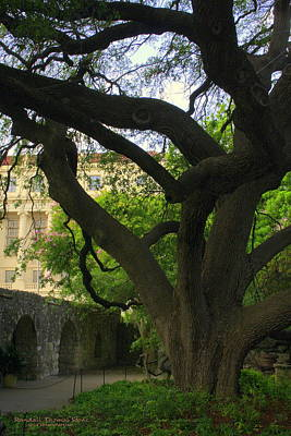 Photograph - Alamo's Majestic Oak by Randall Thomas Stone