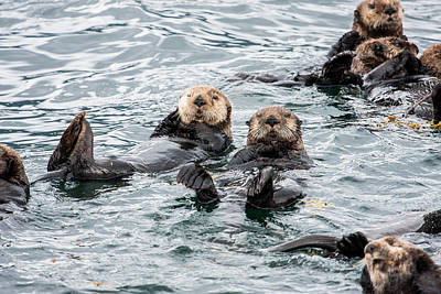 Alaskan Sea Otters Art Print by Josh Whalen