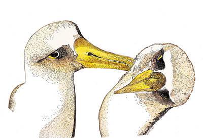Albatross Mixed Media - Albatross by Nancy Mergybrower