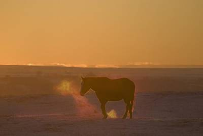 Alberta, Canada Horse At Sunset Art Print