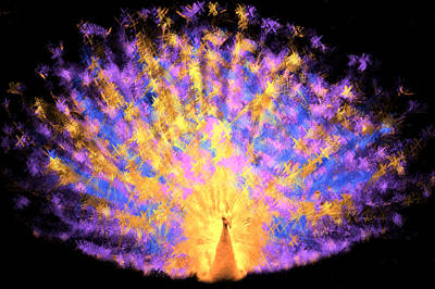 Ebirdsl Digital Art - Albino Peacock by Ilias Athanasopoulos