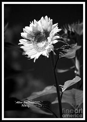 Photograph - Albino Sunflower by Patrick Witz