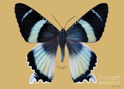 Digital Art - Alcides Agathyus Butterfly by Walter Colvin