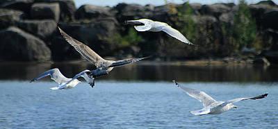 Photograph - Alcona Marina Seagulls 13 by Scott Hovind