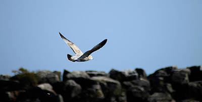 Photograph - Alcona Marina Seagulls 2 by Scott Hovind