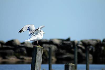 Photograph - Alcona Marina Seagulls 4 by Scott Hovind
