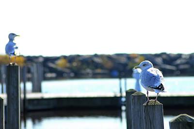 Photograph - Alcona Marina Seagulls 6 by Scott Hovind