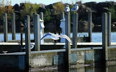 Photograph - Alcona Marina Seagulls 9 by Scott Hovind