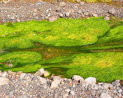 Algae Bloom Natural Abstract Art Of Nature Art Print by Merton Allen