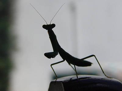 Photograph - Alien by Alessandro Della Pietra