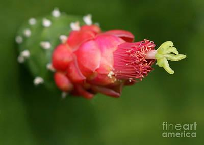 Florida Flowers Photograph - Alien Cactus Flower by Sabrina L Ryan