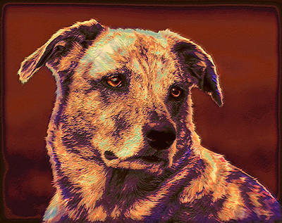Breed Digital Art - All American Mutt 2 by Jane Schnetlage