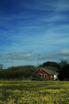 Old House Photograph - All That Yellow by Laurie Search