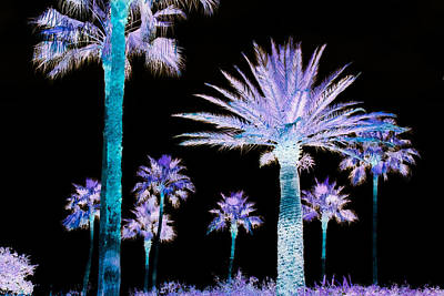 Black Photograph - All The Palms by Trish Tritz