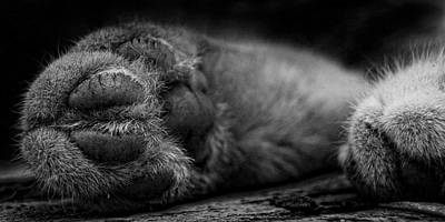 Converse Shoe Photograph - Alley Kat Nap by Jerry Cordeiro