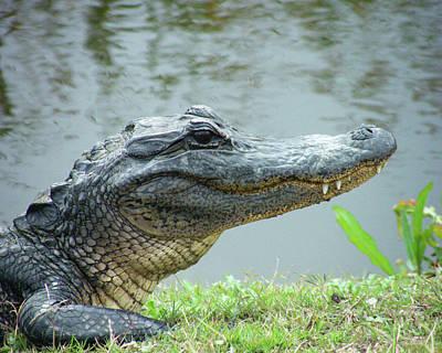 Digital Art - Alligator Cameron Prairie Nwr La by Lizi Beard-Ward