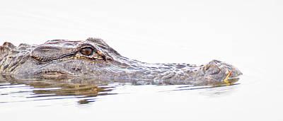Photograph - Alligator Dawn by Jim DeLillo