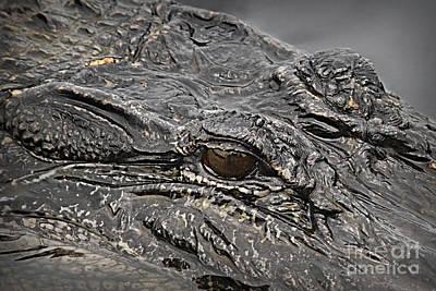 Photograph - Alligator Eye by Danuta Bennett