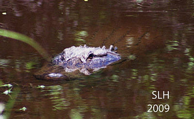 Photograph - Alligator by Lee Hartsell