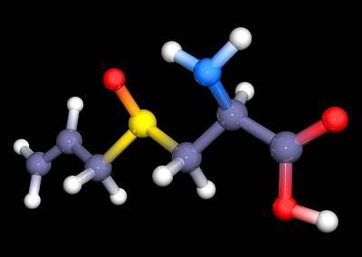 Alliin Molecule Art Print by Pasieka