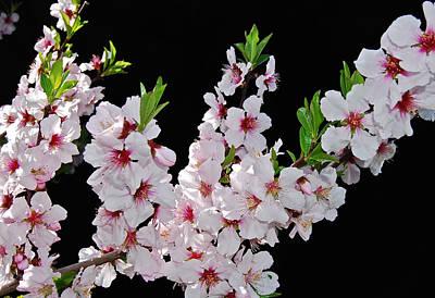Priska Wettstein Pink Hues - Almond Blossom 0979 by Michael Peychich