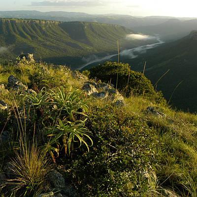 Photograph - Aloe Valley by Alistair Lyne