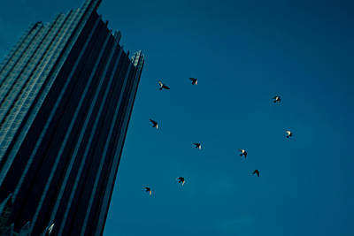 Photograph - Aloft by Jason Heckman