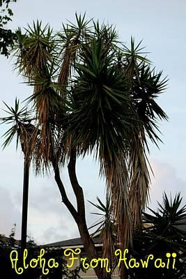 Photograph - Aloha by Elizabeth  Doran